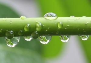 Reflections in rain drops...