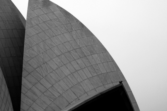 Pigeon on Lotus Temple leaf